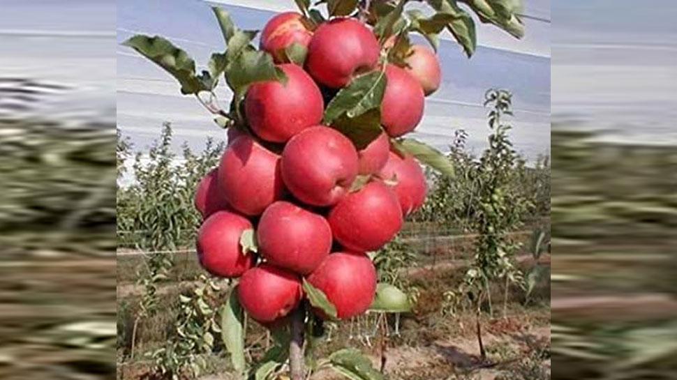 J&K: शोपियां के किसानों से जानें, कश्मीर के सेब कारोबार में क्या हैं रुकावटें