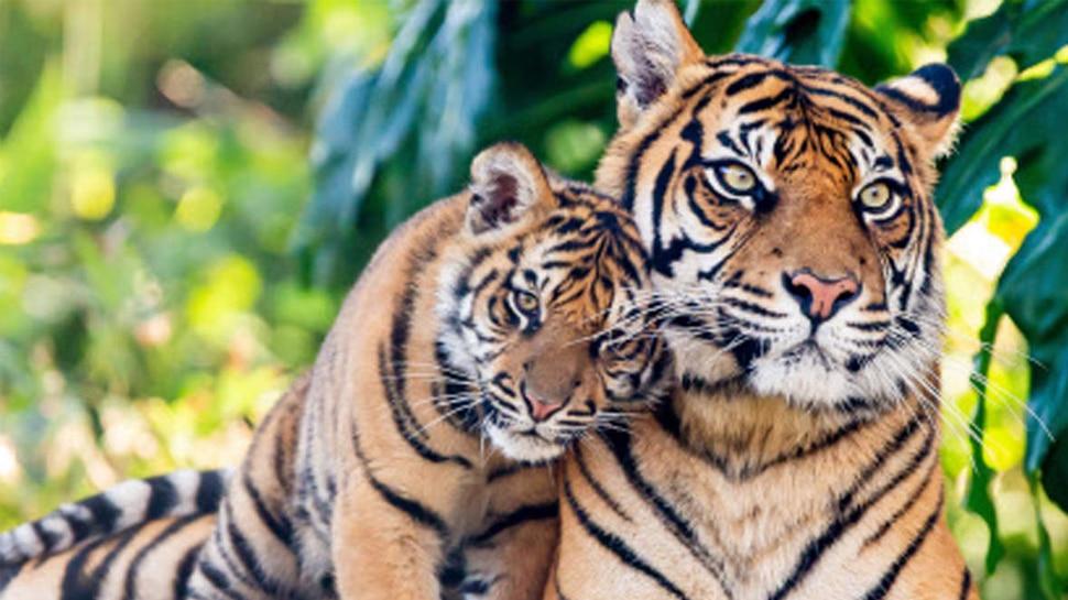 बाघों की संख्या में इजाफा, बिहार का कैमूर वन क्षेत्र बनेगा टाइगर रिजर्व