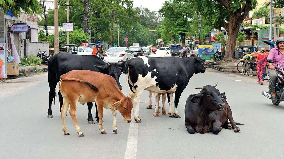योगी सरकार की अनोखी मुहिम, गाय पालने पर हर महीने मिलेंगे इतने रुपये