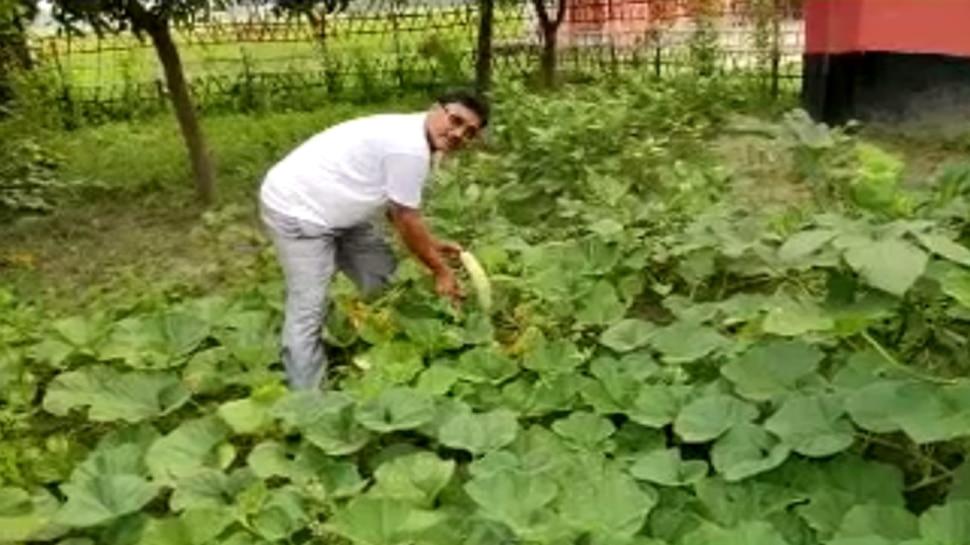 बिहार: MDM के लिए स्कूल में ही होती है सब्जी की खेती, बच्चों को मिलता पौष्टिक खाना