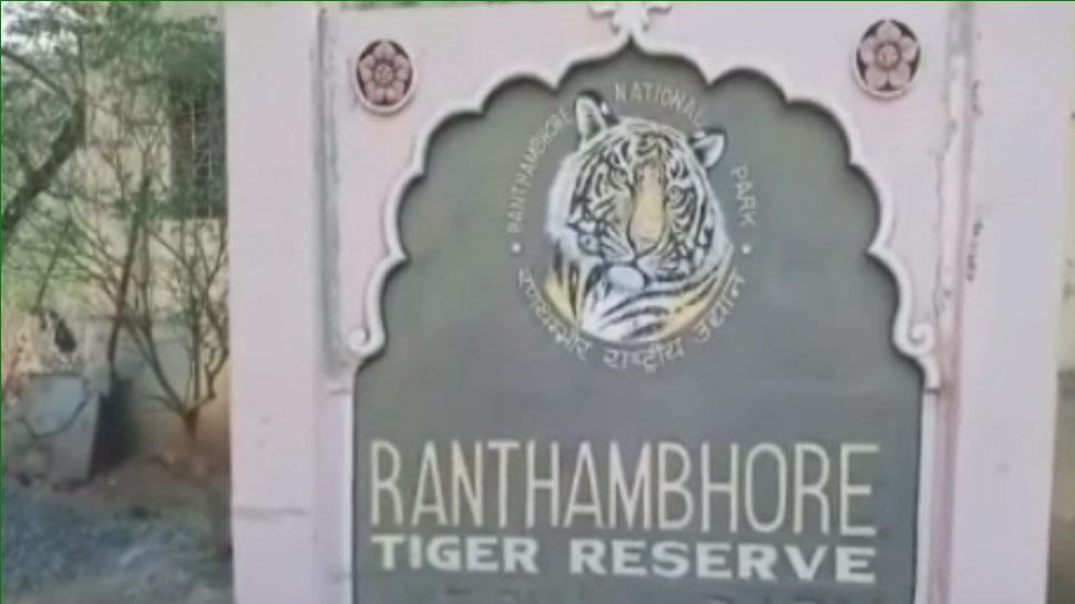 रणथंभौर: 3 लोगों को मौत के घाट उतार चुका है टी-104, विभाग कर रहा बाघ को ट्रेंकुलाइज करने की कोशिश