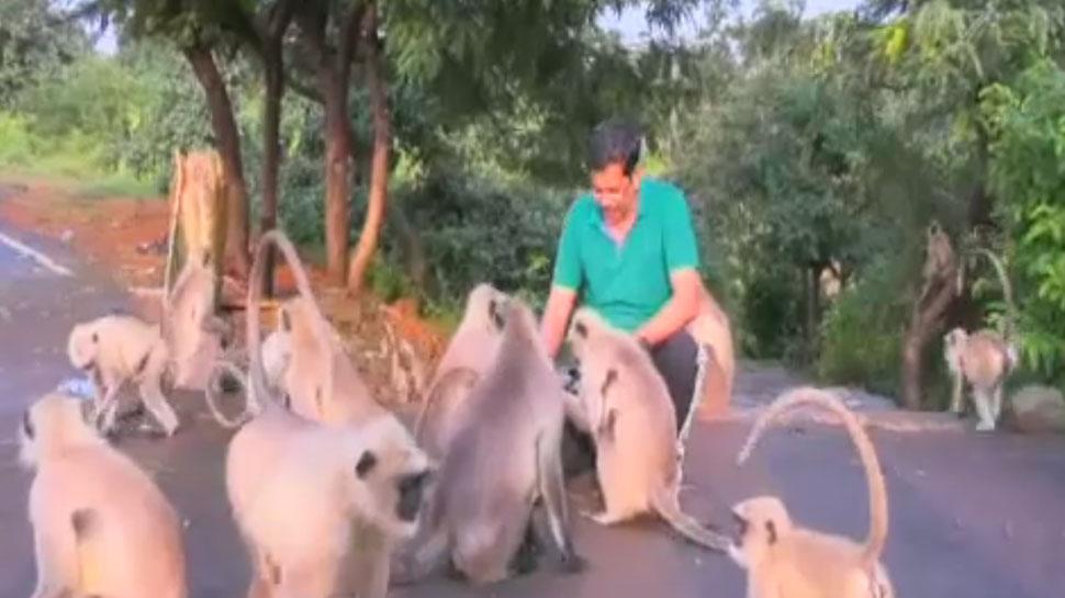 इस आदमी की बंदरों से दोस्ती है बेमिसाल, कभी नहीं रहते अलग