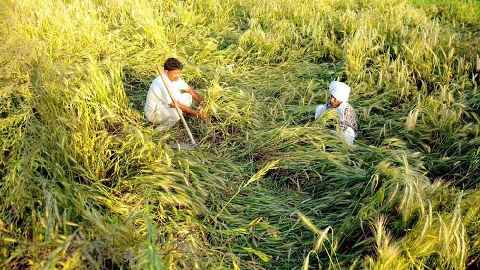 हरियाणा के किसानों के लिए खुशखबरी, जंगली जानवरों के फसल नुकसान पर मिलेगा मुआवजा