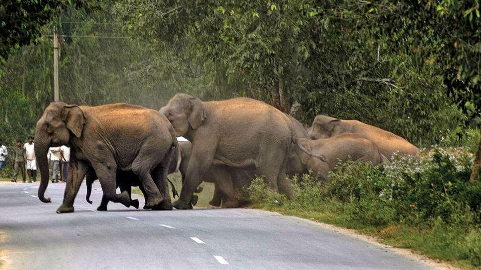 गुमला: जंगली हाथियों ने गांव पर किया हमला, सड़क पर आए 10 से अधिक घरों के लोग