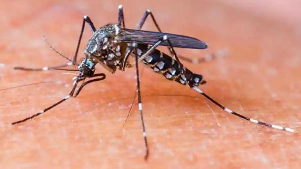 मध्य प्रदेशः ग्वालियर में बढ़ रहा डेंगू का प्रकोप, 14 नए मरीजों की पुष्टि