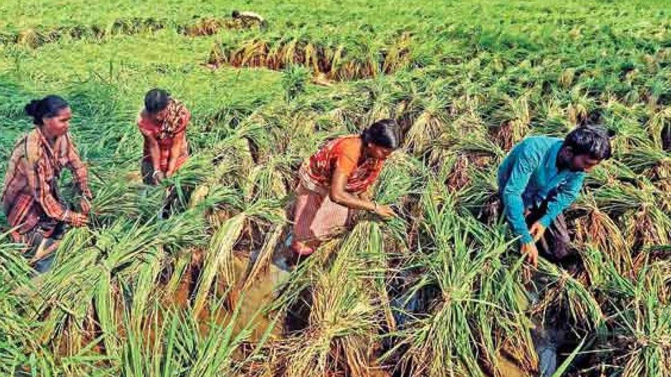 राजस्थान: बिजली न मिलने से किसान परेशान, आए दिन दफ्तरों के चक्कर लगाने को हैं मजबूर