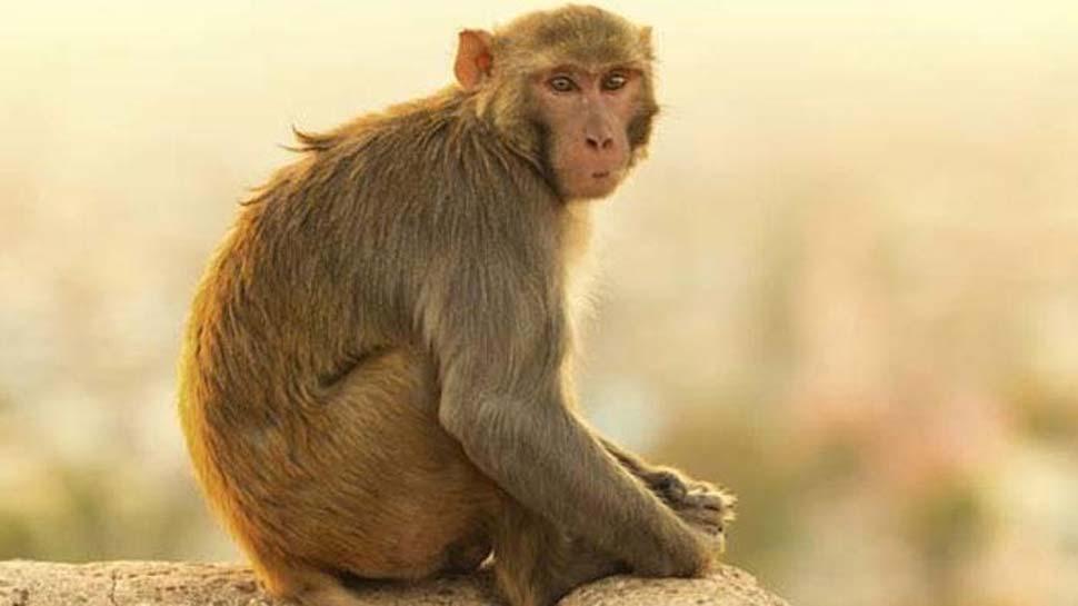 3 युवकों ने बंदर को मारी गोली, ये खबर सुनते ही जुट गई भीड़ और फिर...