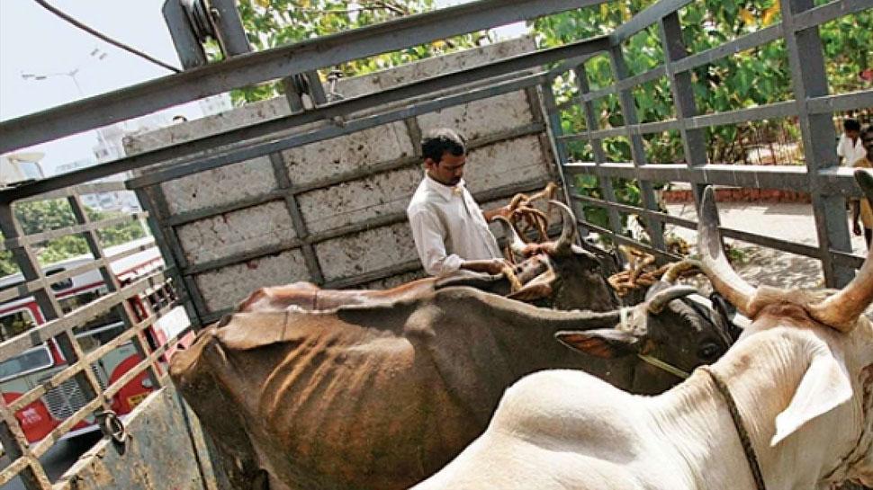 भरतपुर: क्यूआरटी पुलिस और गौ तस्करों के बीच फायरिंग, आरोपी फरार