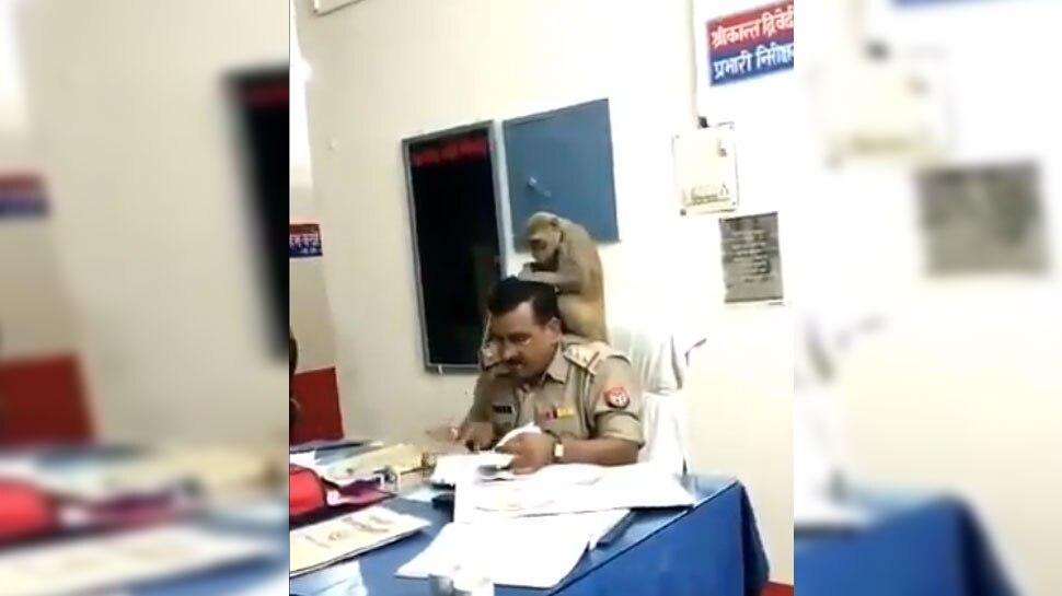 VIRAL VIDEO: ...कोतवाल साहब के कंधे पर बैठा बंदर और ढूंढने लगा जुएं
