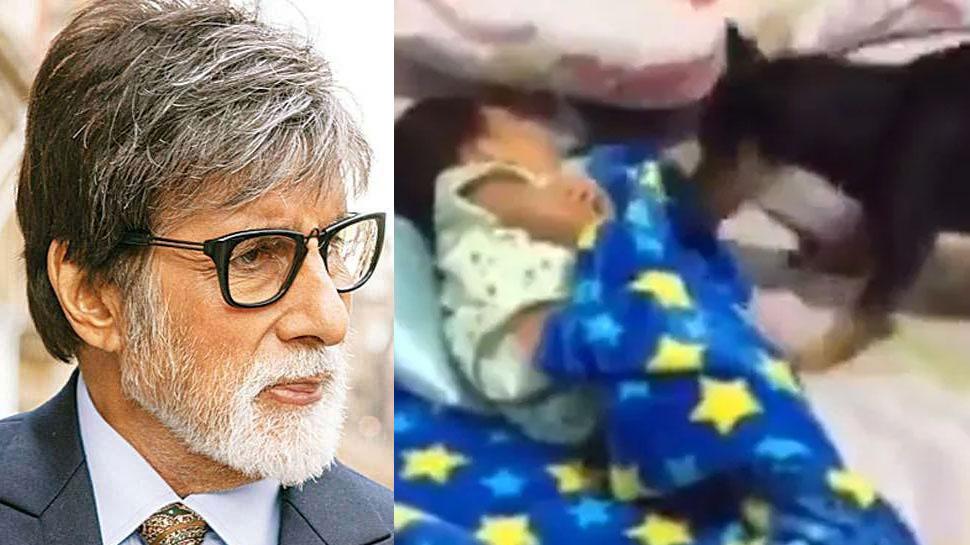 डॉगी ने सोते बच्चे को प्यार से ओढ़ाया कंबल! अमिताभ बच्चन ने शेयर किया VIDEO