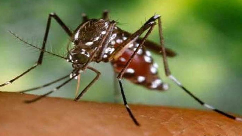 हल्द्वानी में डेंगू से एक और मरीज ने तोड़ा दम, अब तक 17 लोगों की मौत