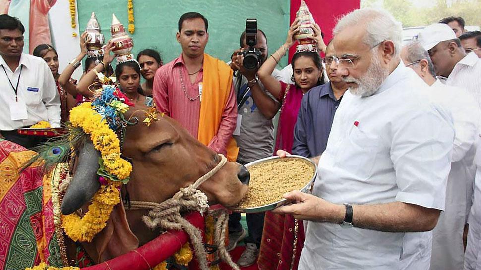 पशुधन गणना : मोदी राज में बढ़ी गायों की संख्या, 18 प्रतिशत की बढ़ोतरी दर्ज