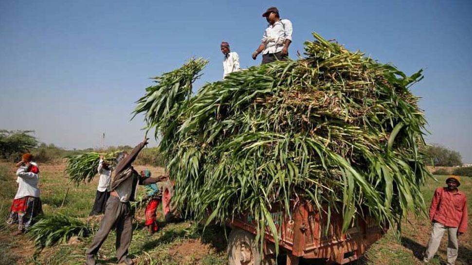 राजस्थान:समर्थन मूल्य पर किसानों से मूंग की खरीद के लिए पंजीकरण एक बार फिर बढाया गया