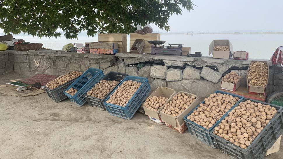 सेब ही नहीं इस साल खूब डिमांड में है कश्मीरी अखरोट, व्यापारियों को है अच्छे रेट की उम्मीद