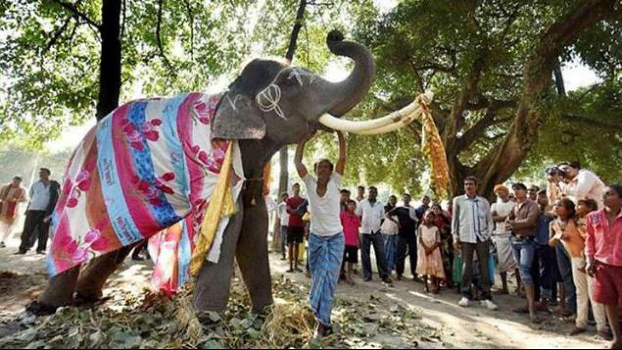 बिहार: सोनपुर मेले में होंगे आधुनिक सुविधा वाले 'स्विस कॉटेज', ऑनलाइन बुकिंग शुरू