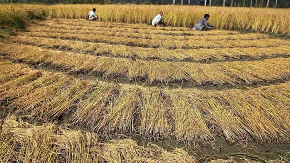 फिर गरमाई छत्तीसगढ़ की सियासत, किसानों को बोनस देने पर धान नहीं खरीदेगी केंद्र सरकार: सूत्र