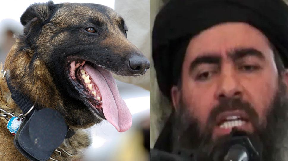 बगदादी के पास थे 3 ऑप्शन, कुत्तों से खुद को नोचवाता या गोलियों से छलनी होता या फिर...