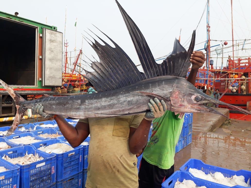 ओडिशा में मिली एक अनोखी मछली, कीमत जानकर आप रह जाएंगे हैरान