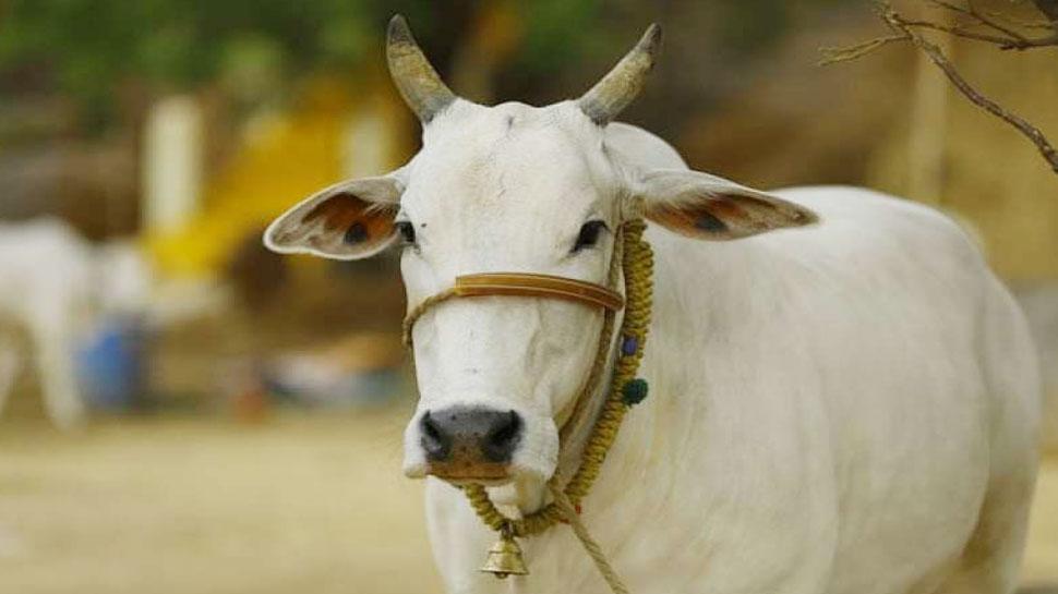 पशु संजीवनी मुफ्त सेवा योजना बंद, अब 100 रुपये में होगा गाय का इलाज