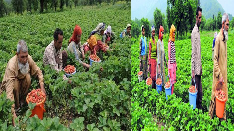 जम्मू-कश्मीर के किसान होंगे मालामाल, मोदी सरकार ने बनाया नया प्लान