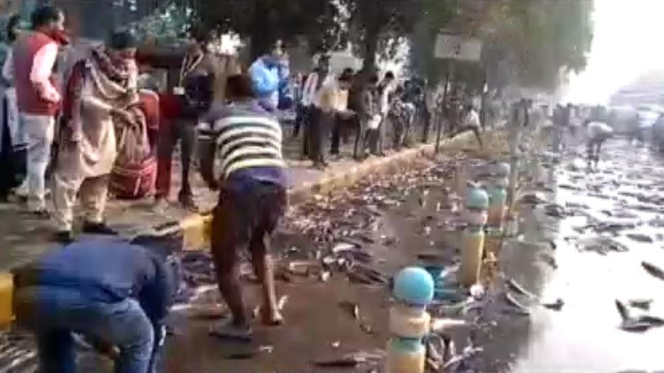 VIDEO: मछलियों से भरा ट्रक पलटा, बटोरने के लिए दौड़े लोग