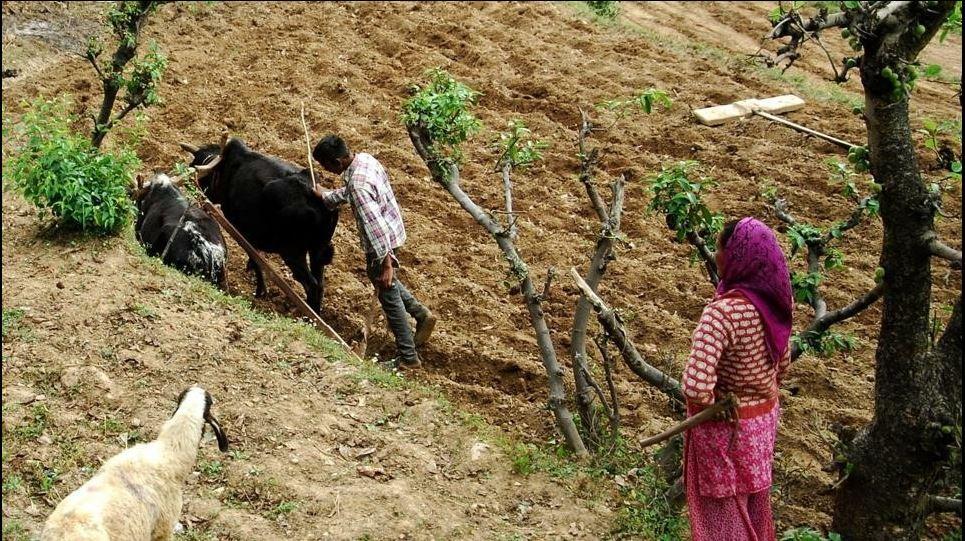 कुदरती खेती को बढ़ावा देने के लिए उत्तराखंड सरकार की सराहनीय पहल