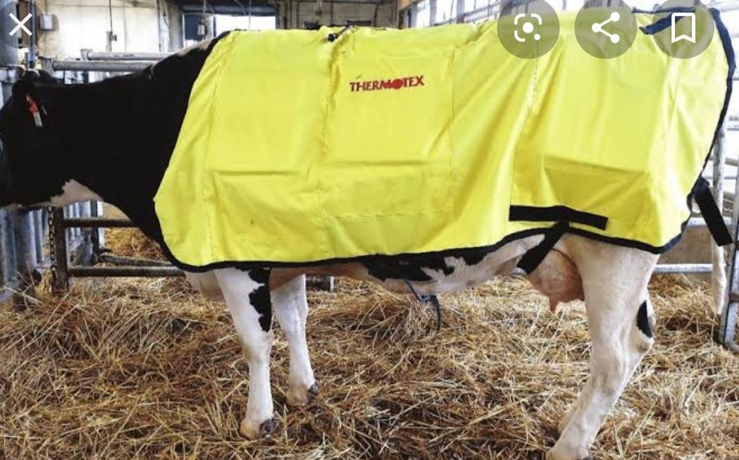राम नगरी में इस बार गायों को कुछ इस तरह ठंड से बचाया जाएगा