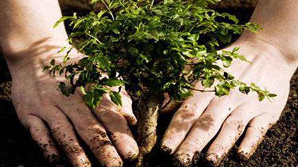 युवक ने अपनी शादी से पहले लगाए 100 पौधे और उनकी देखभाल करने का किया प्रण