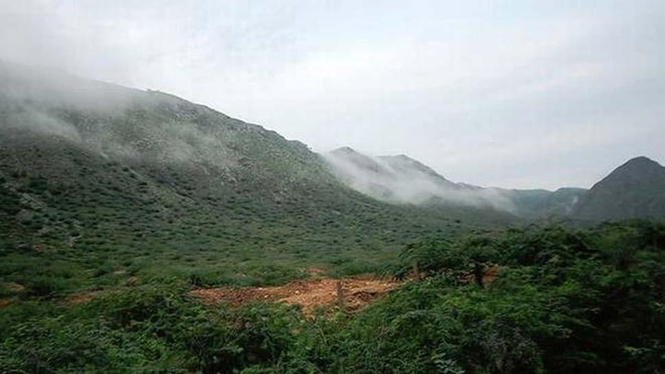 हरियाणा: वन क्षेत्रों को बचाने के लिए हाईकोर्ट सख्त, दिया ये बड़ा आदेश