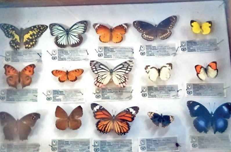 मौत के बाद भी रंग बिखेरेगी तितली, ऑनलाइन हो रही बिक्री