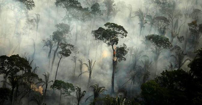 चीन और ब्राजील सैटेलाइट से करेंगे अमेजन के जंगलों की निगरानी