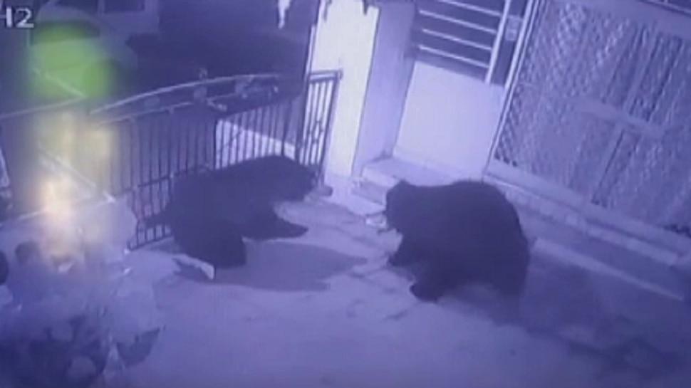 सिरोही: एक होटल के सीसीटीवी कैमरे में कैद हुआ भालुओं का वीडियो