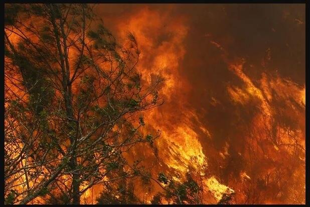 ऑस्ट्रेलिया में लगी आग ने वाइन इंडस्ट्री को किया तबाह