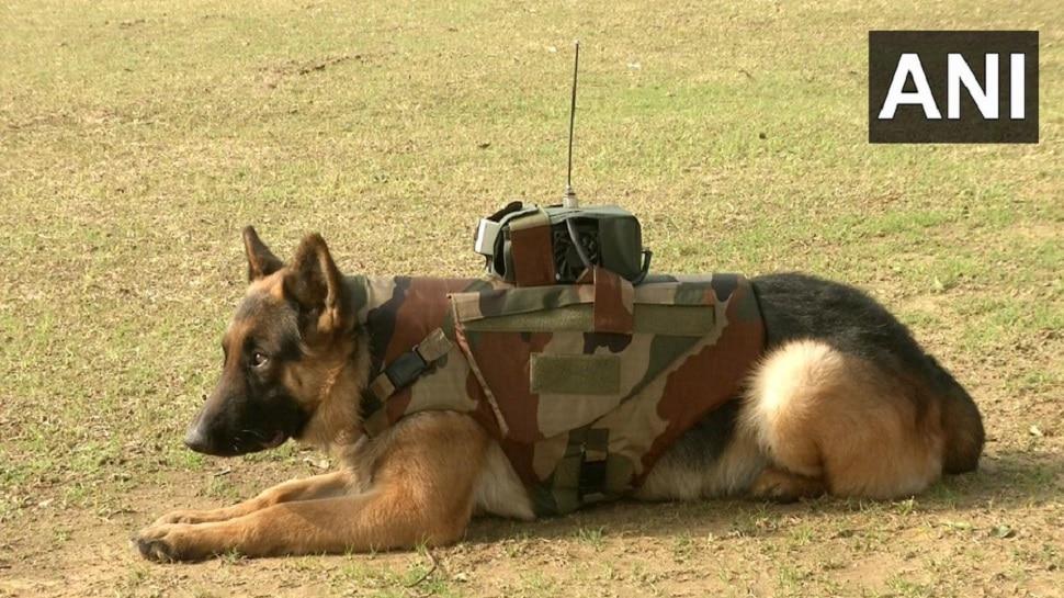 भारतीय सेना के जांबाज डॉग्स के लिए तैयार की गई बुलेट प्रूफ जैकेट, मिलेगा यह आधुनिक सिस्टम