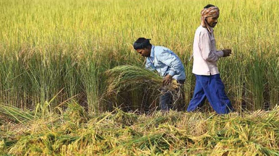 राजस्थान में खिले किसानों के चेहरे, समर्थन मूल्य पर फसल की हुई बंपर खरीद