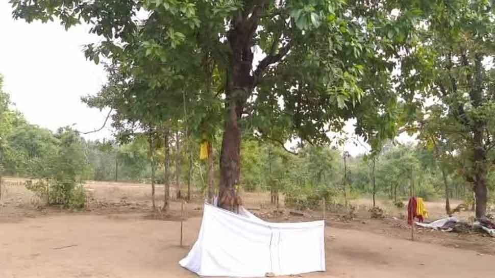 बैतूल: अंधविश्वास पर वनकर्मियों ने की चोट, बंद कराई चमत्कारी पेड़ की दुकान