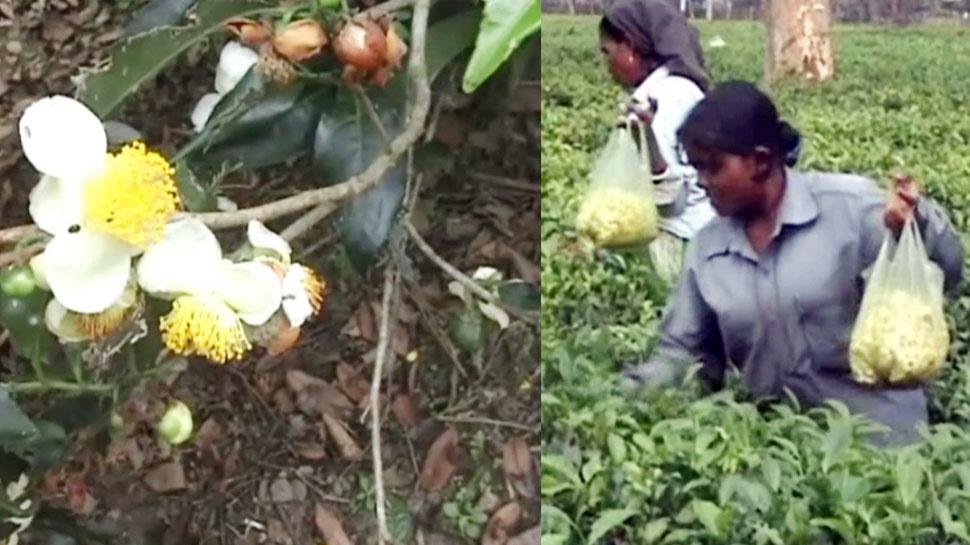 गरीबी क्या ना कराए! सब्जी की औकात नहीं तो, फूलों से ही चला रहे काम