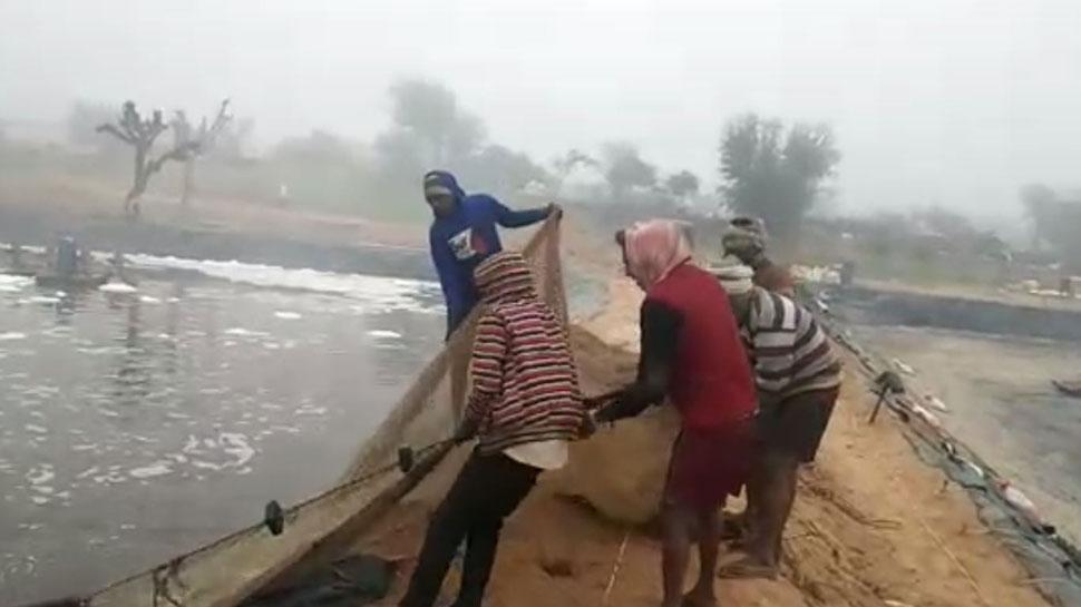 झींगा मछली पालकर चूरू के किसानों ने कमाए दस करोड़, विदेशों में बढ़ रही मांग