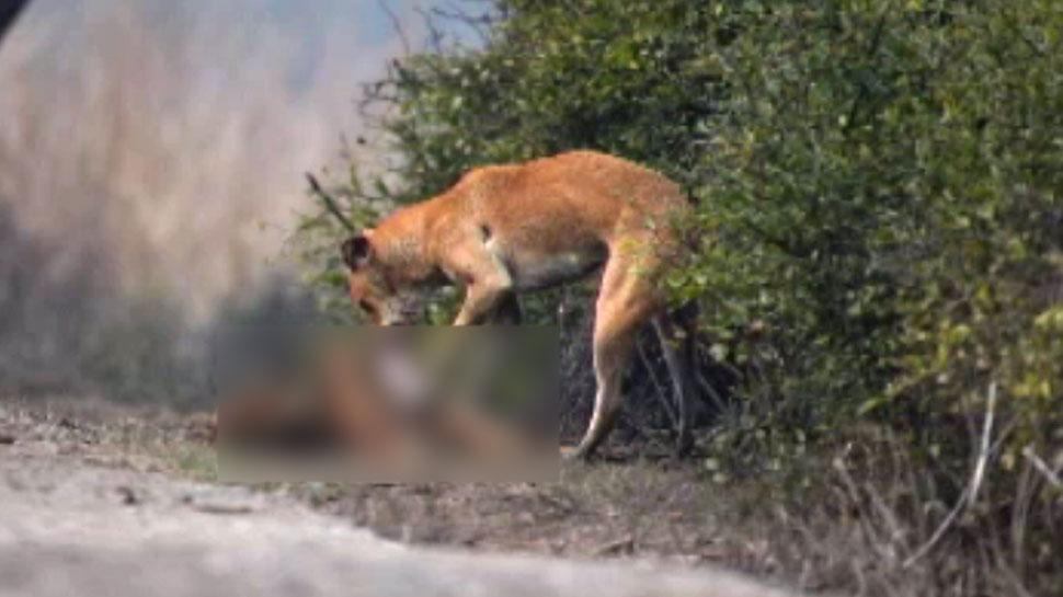 भरतपुर: केवलादेव राष्ट्रीय उद्यान में कुत्तों का आतंक, रोजाना कर रहे सांभर-चीतलों का शिकार