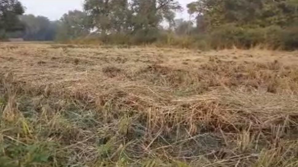 बिहार: बेमौसम बरसात से किसानों में छाई मायूसी, फसल हुए बरबाद