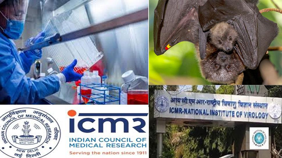 कोरोना को लेकर भारत में किया गया चमगादड़ों पर टेस्ट, सामने आई हैरान करने वाली सच्चाई