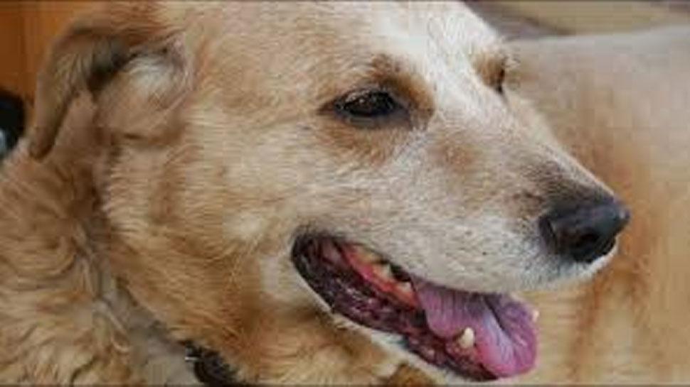 कुत्ते को बांधकर तालाब में डुबोने का वायरल वीडियो, एक्शन में आया महाराष्ट्र पुलिस का साइबर सेल