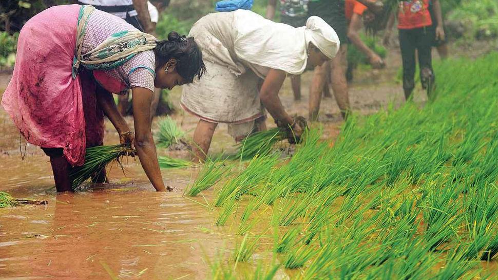 झारखंड में किसानों की आय बढ़ाने के लिए व्यावसायिक खेती को प्रोत्साहन
