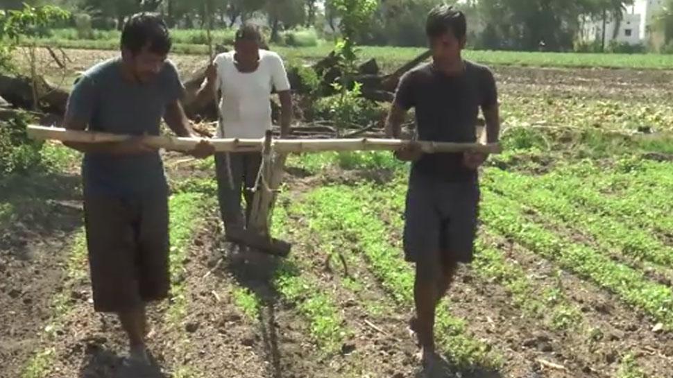बुरे हालात में किसान पिता ने बेटो को बैल बनाकर जोता खेत, तस्वीरें हो रही वायरल