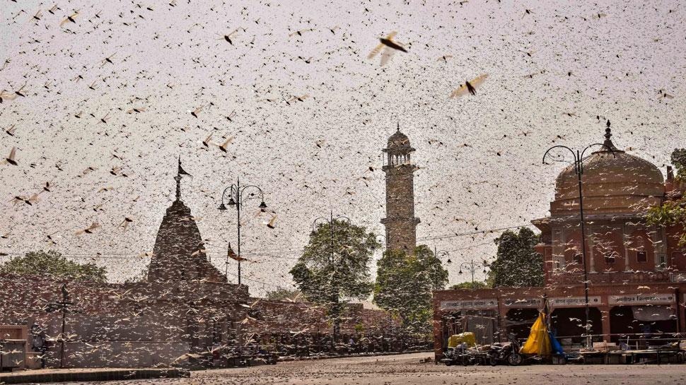 टिड्डियों के हमले पर PM मोदी ने जताई चिंता, बोले- पीड़ितों की मदद की जाएगी