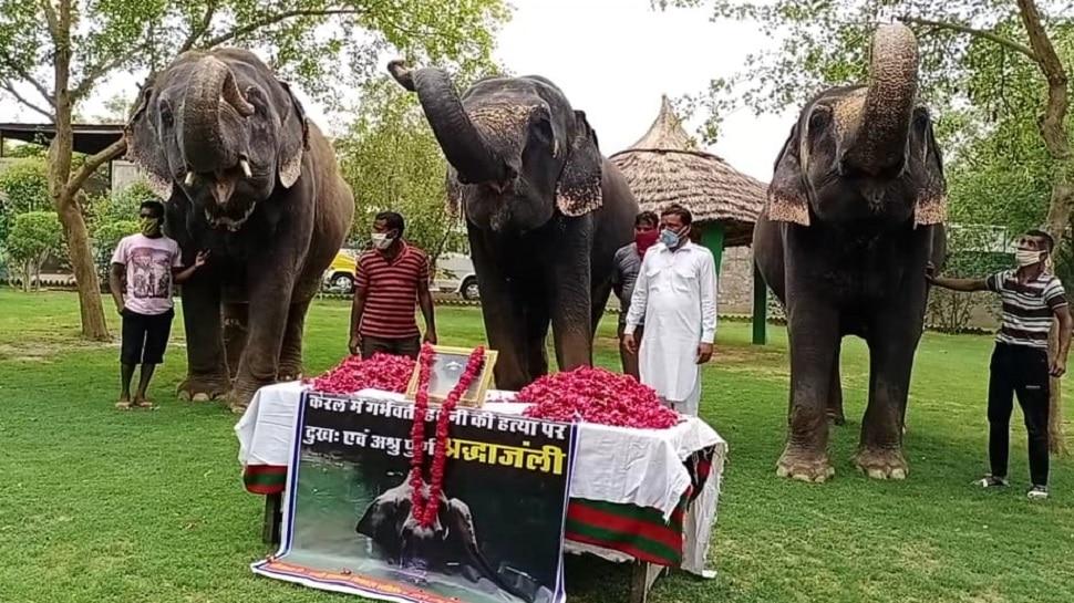 जयपुर: हाथी गांव में केरल में हथिनी के लिए श्रद्धांजलि कार्यक्रम, दिया ये संदेश