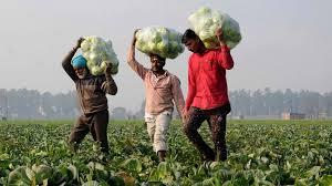 मुरादाबाद: कोरोना काल में किसानों ने निकाली ये तरकीब, आसानी से बिकती हैं सब्जियां
