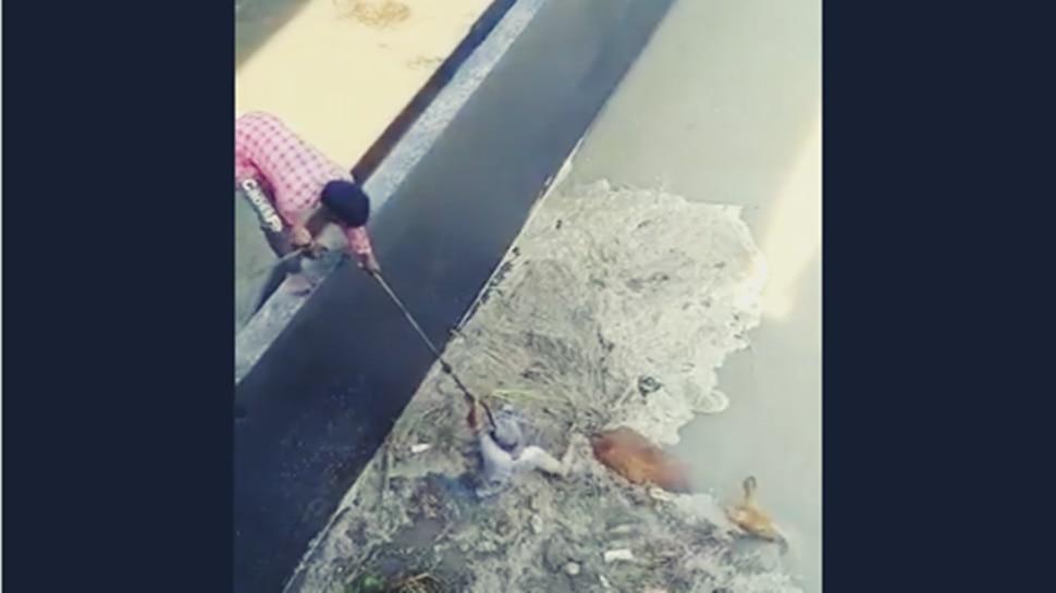 VIDEO: नदी में फंसा था हिरण, शख्स ने अपनी जान हथेली पर रखकर ऐसे निकाला बाहर