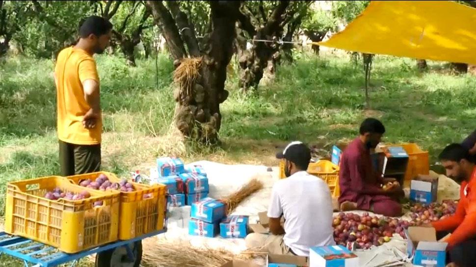 जम्मू-कश्मीर में फलों की खेती पर कोरोना का असर, किसानों को भारी नुकसान