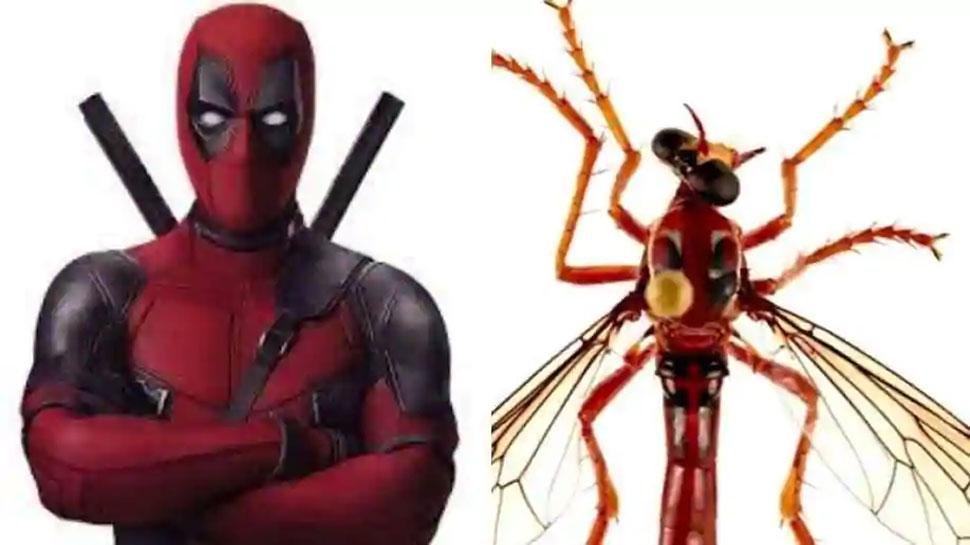 मार्वल सुपरहीरोज के नाम पर रखे गए मक्खी की 5 प्रजातियों के नाम, जानिए पूरी खबर